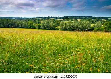 A walk in June from Robertsbridge to Silver Hill in East Sussex south east England