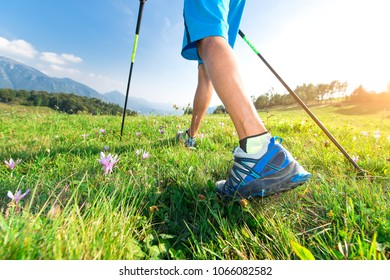 Walk in the meadow with spring flowers with Nordic walking poles.