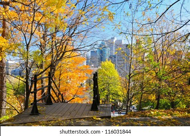 A walk in Montreal woods during foliage season, Quebec, Canada