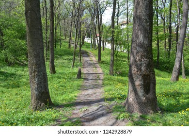 Walk path through a wood in Serbia