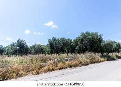 Walk through the countryside of Puglia, in southern Italy. A clear day with a blue sky dominates the landscape of trees and meadows of the countryside.