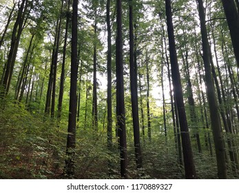 Walk through forest to clear mind