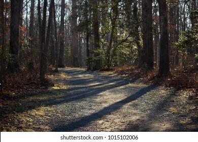Walk Through the Forrest