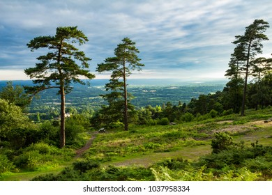 A walk through the Surrey countryside and to the top of Leith Hill South east England July