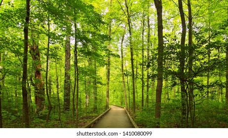 A walk with the trees