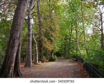 Walk trough autumnal park