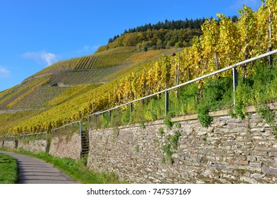 A walk in the vineyards in golden October.