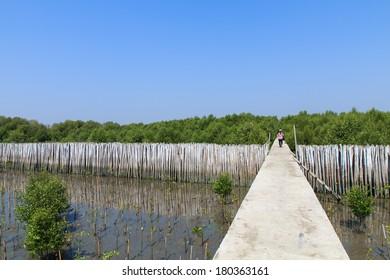 Walk way bridge in the garden during day time