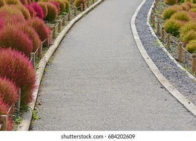 Walk way in the field of Kochia at Hitachi Seaside Park in Hitachinaka, Ibaraki, Japan. Life Goal Concept. Direction to target.