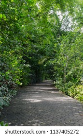 walk way in the park