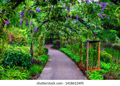 Walk way of trees in the park