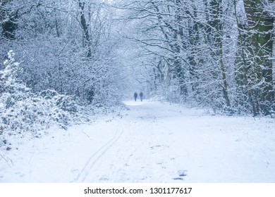 A Walk in the winter