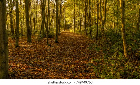 a walk in the woods in the early morning light in autumn