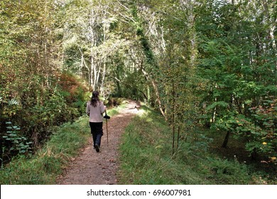 A walk in the woods, metaphor of peace, calm, serenity, harmony, fullness, well-being, nature, natural, contemplate, meditate, breathe, grow, happiness, tranquility, fullness, loneliness,