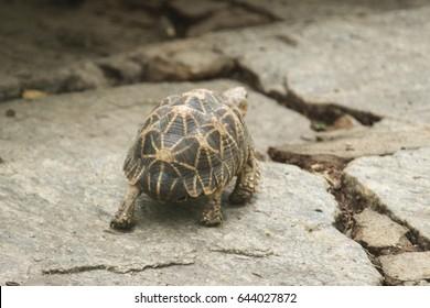 Walkaway tortoise