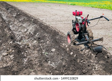 Walk-behind tractor with plow makes furrow in soil. Gasoline cultivator in the garden.