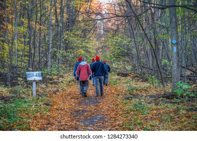 Walkers stroll through northern woods on a groomed trail in an early morning in winter