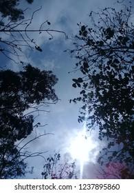 Walkin day in Forest