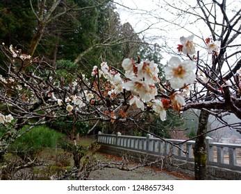 Walking 5 days trip at Kumano-Kodo, UNESCO World Heritage in Nachi, Wakayama, Japan. March 2018