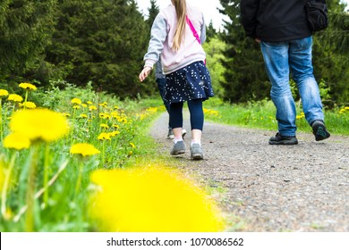 Walking along dandelion meadows on a chill summer day
