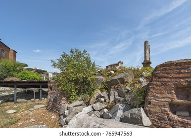 Walking around Roman Forum