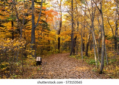 Walking in autumn forest