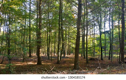 Walking in the beech forest