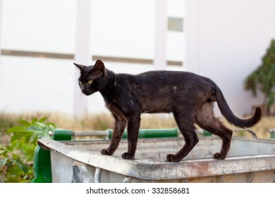 Walking black homeless cats on a trash can