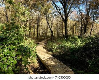 Walking boardwalk in woods
