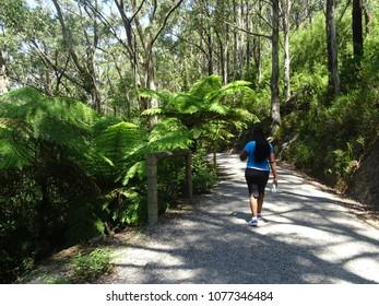 walking in bush