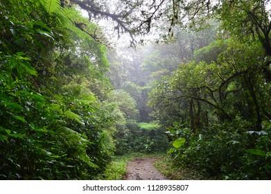 Walking in Costa Rican cloud forest in Monteverde