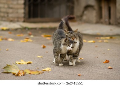Walking couple of two loving cats near falling foliage