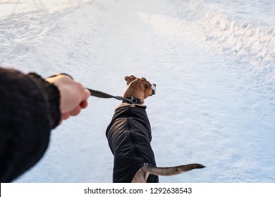 Walking with a dog in coat on cold winter day. Person with a dog in warm parka on the leash at a park, owner's point of view