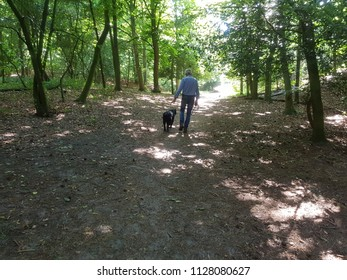 walking a dog in the forest