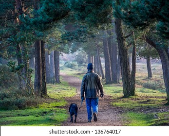 Walking a dog in New forest in the evening.