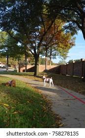 Walking dogs in autumn