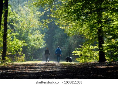 walking with dogs in the forest, valtherbos, drenthe, netherlands