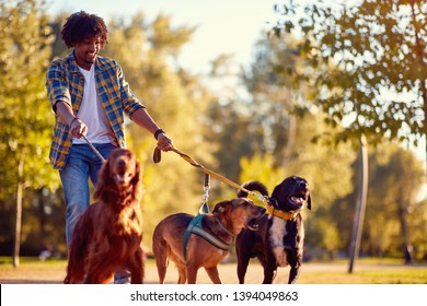 Walking dogs - Happy man dog walker enjoying with dogs