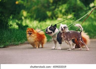 Walking dogs in park
