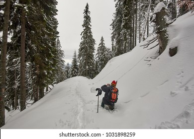 Walking in the fir forest, covered with snow in the middle of winter.