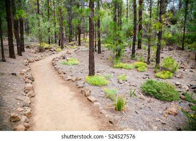 walking footpath in the beautiful mountain forest near Vilaflor village, Tenerife, Spain
