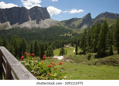 Walking Footpath through Meadows, Italian Alps Mountains in background.