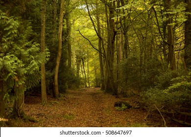 Walking in the Forest of Dean. The Forest of Dean lies on the English Welsh border and is an area of outstanding beauty. Much of the forest has been put to one side for public use.
