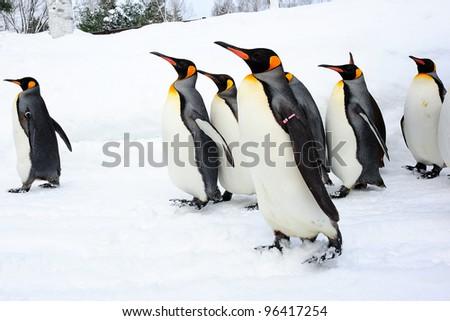 Walking King Penguin Foto de stock (editar ahora)96417254; Shutterstock