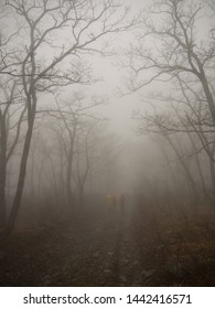 Walking on foggy road, get lost in mystical forest concept