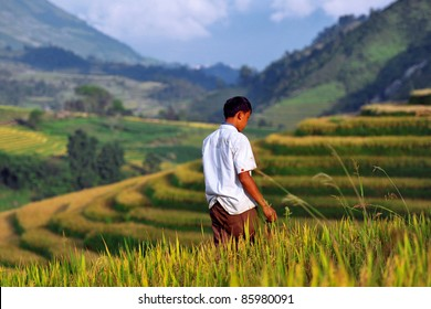 Walking on rice fields
