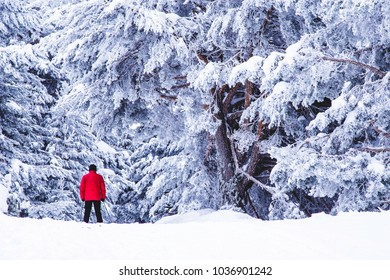 Walking on the snow forest in the mountains