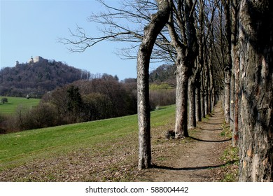 walking path in an alley of trees, views of the castle Buchlov, Czech Republic, early spring