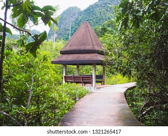 Walking path among the mangrove forest with the wood pavilion in Krabi province, Thailand