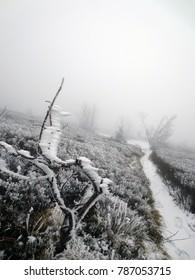 Walking path , Bieszczady Mountain, Poland